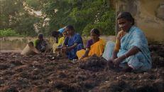 http://footage.framepool.com/en/shot/539126596-palani-murugan-temple-hair-industry-pilgrimage-site-quality-control